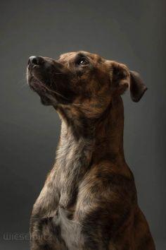 Une sélection des portraits de la photographe allemande Elke Vogelsang, basée à Hildesheim, qui réalise de superbes photographies canines. Des portraits d