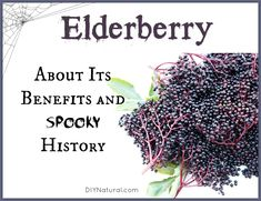 Elderberry benefits us in many ways. Nowadays we use it as an antibiotic against the flu and many other sicknesses, but did you know about it& spooky past? The post Elderberry Benefits and Some Spooky Elderberry History appeared first on Aktuelle. Cold Home Remedies, Natural Health Remedies, Herbal Remedies, Healing Herbs, Medicinal Herbs, Natural Healing, Natural Medicine, Herbal Medicine, Elderberry Benefits