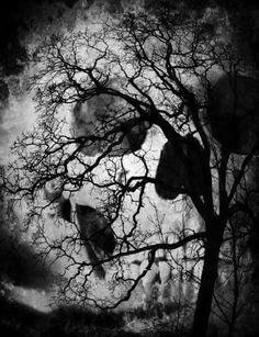 tree skull Art Print by Joedunnz - X-Small Dark Fantasy Art, Dark Art, Totenkopf Tattoos, Skull Pictures, Bild Tattoos, Skull Artwork, Skull Wallpaper, Illusion Art, Halloween Pictures