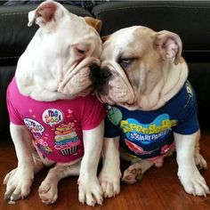 "Previous Pinner: ""❤ This pic is so genuine bulldog emotion. These babies are such lovers of their families (be they 2 or 4 legged). ""Cookie"" is in Pink & she has her own Instagram Account @cookie_the_bulldog (according to her mom) ❤ Posted from I love English Bulldogs"" They are sweet, and loving animals!"