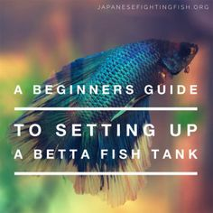 Beginners guide to setting up a betta fish aquarium. What tank? What specs? How to prepare.