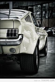 Mustang eterna paixão entre homens com ousadia.