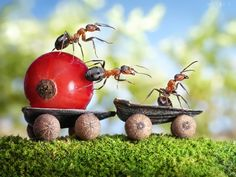 Russian photographer Andrey Pavlov creates wonderful fairy tale photos of live ants by releasing the insects into intricate dioramas and waiting for the perfect moment to shoot.
