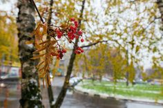 between Autumn and Winter Phase One, Autumn, Facebook, Feelings, Winter, Nature, Photography, Free, Instagram