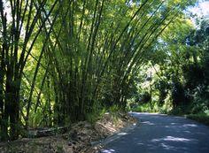La Ruta Panoramica (Puerto Rico)