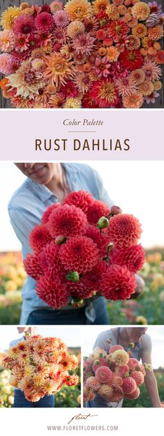 Floret's favorite dahlias in rust colored hues include: Intrigue, Amber Queen, Punkin Spice, Terracotta, Irish Pinwheel, Hy Suntan, Crichton Honey, Totally Tangerine, Sherwood's Peach, Valley Tawny, Ginger Willo.
