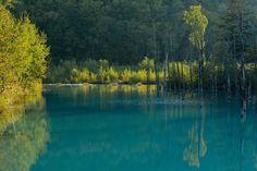 Kent Shiraishi, The Blue Pond & Yellow Leaves. Biei, Hokkaido.