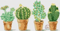 Cactuses 4