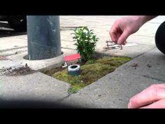 Pothole garden 2 Uitvinderswijk Den Haag Green street Art