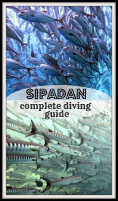 Ultimate guide to diving Sipadan island, Malaysia