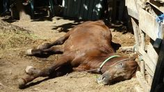 Petition · Governor of Lombok, Indonesia: Stop the inhumane torture of horses & slavery on the Gili Islands. Replace the horses with solar powered Tuk Tuks. · Change.org