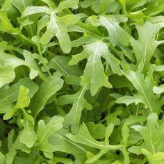 Echte Salat-Rauke (Eruca sativa)