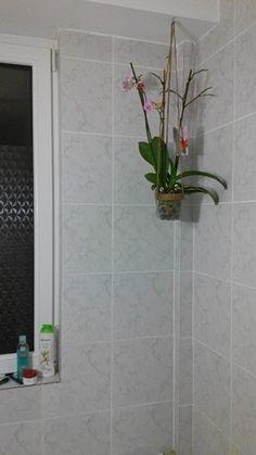 Flori in baie
