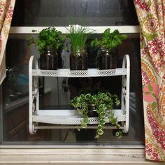 Window mounted herb garden: vintage shelf, command strip hooks, & mason jars!