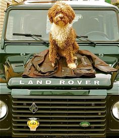 land rover barbour - we're still not getting the dog. its the Land Rover we're focussing on here Landrover Defender, Defender 90, I Love Dogs, Puppy Love, Cute Dogs, Spanish Water Dog, Land Rover Models, Off Road, House In The Woods