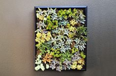 Wall Art with Succulents