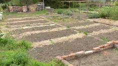 Bio megoldások a konyhakertben - Artis Stepping Stones, Board, Garden, Outdoor Decor, Stair Risers, Garten, Lawn And Garden, Gardens, Gardening