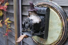 Items similar to Watch The Birdy- Rogue-Taxidermy Assemblage by Rainey J Dillon on Etsy Faux Taxidermy, Rogues, Watches, Etsy, Wristwatches, Clock