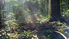 Tenacious Rays ~ On the rainforest floor / Richly green and always moist / It is not life which is persistent / Must be tenacious / Bold / Resourceful :: click through to read North Vancouver, Spiritual Awakening, Poetry, Floor, Green, Life, Poems, Floors, Flooring