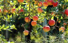 Stories under an apple-tree