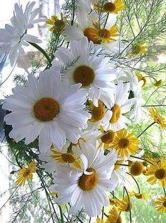 Amo las flores. 🌷🥀🌾🐝🦋💚❤️