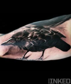 Raven tattoo for my sleeve