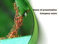 http://www.pptstar.com/powerpoint/template/cooperative-work/Cooperative Work Presentation Template