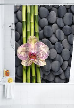 Zasłona prysznicowa Spa WENKO kolor kolorowy w Mango