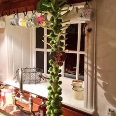 Sprouts as Christmas decorations