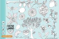 Lemon LineArt Doodles by Carrie Stephens Art on @creativemarket