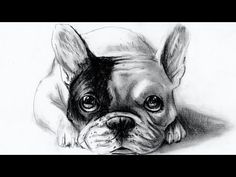 how to draw dog - come disegnare un cane (bulldog francese/French Bulldog) - YouTube