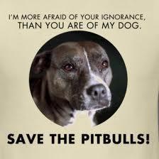 save a bull