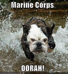 My hubby (ex-Marine) wants a bulldog for our next one! Once A Marine, Marine Mom, Us Marine Corps, Marine Life, Funny Animal Pictures, Funny Animals, Cute Animals, Animal Funnies, Animal Quotes