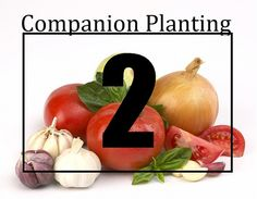 Companion Planting Made Easy-ish: Part 2 of 3