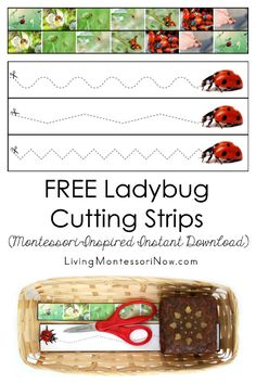 These free Montessori-inspired ladybug cutting strips are an instant download with a variety of skill levels; scissor cutting practice for classroom or home; perfect for a ladybug or insect theme - Living Montessori Now #Montessori #homeschool #toddler #preschool #ladybugtheme
