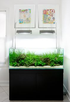 Aquarium Design Group - An ADA 120-P Complete System  Someday I will have a tank like this