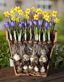 Shorty's advice on planting bulbs and ways to prevent squirrel & vole problems with them.
