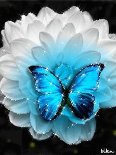 Beautiful Butterflies are one of a lot of varied as well as attractive insects worldwide. The huge team of butterflies consist of greater than 250000 flavor