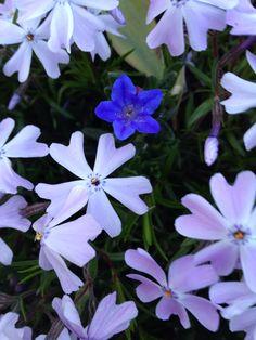 You are special! Www.tooshieblog.com