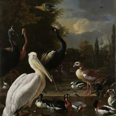 A Pelican and other Birds near a Pool, Known as 'The Floating Feather', Melchior d'Hondecoeter, c. 1680 - Rijksmuseum