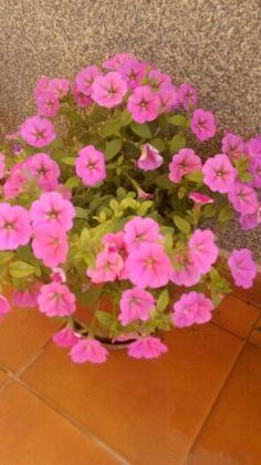 Mid flores