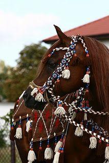 Zrób to sam - Dla Konia i dla Jeźdźca