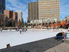 Olympic Plaza was built in 1988 when Calgary hosted the Olympic Winter Games. In colder months it is home to the only refrigerated outdoor ice surface in the city. Oliver is keeping an eye out for anyone who makes ice skates for cat paws! Learn more about Olympic Plaza here: http://www.calgary.ca/CSPS/Parks/Pages/Locations/Downtown-parks/Olympic-Plaza.aspx