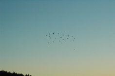 Veranstaltungen im #Nationalpark #Schwarzwald für die Kalenderwoche 41  Foto: #Vogelzug (Rebbe)  blackforest  https://www.facebook.com/pro.nationalpark.schwarzwald/photos/a.328219737209199.76829.328214050543101/1263572213673942/?type=3&theater