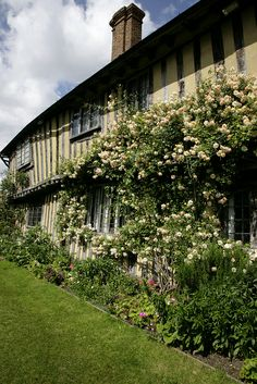 beautiful roses growing up the timbered cottege @smallhythe place kent