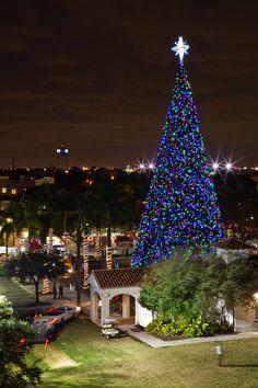 Delray Beaches 100ft Christmas Tree