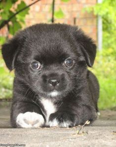 Cute Puppy - See more cute puppy pictures and dog training tips at TrainMyPuppies.com