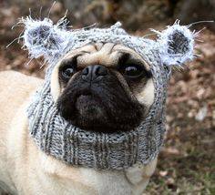 pug hat!