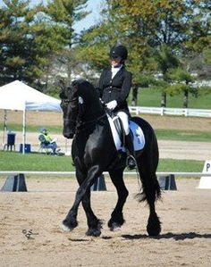 Fourth level show stopping championship Friesian. A perfect gentleman that has been trained and shown professionally but can be ridden by anyone! Ready to compete at 4th this year. Get ready for ooo's and ahhhh's with this wonderful horse! $50,000