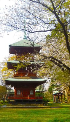 A perfect morning by Tim Ernst on 500px. Pin via http://a.tailwindapp.com/cbBTQ A pagoda in spring in Japan